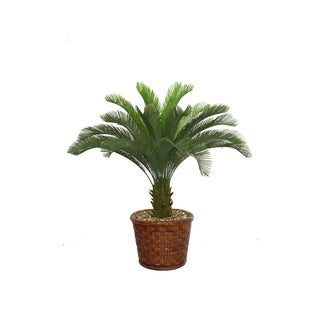 "Laura Ashley 53"" Tall Cycas Palm Tree in 17"" Fiberstone Planter"