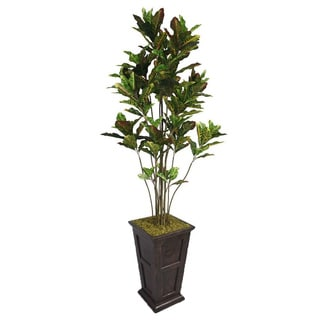 Laura Ashley 91-inch Tall Croton Tree with Multiple Trunks Fiberstone Planter