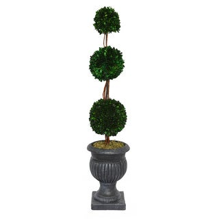 Triple Ball 44-inch with Black/ Grey Planter Natural Preserved Boxwood Arrangement
