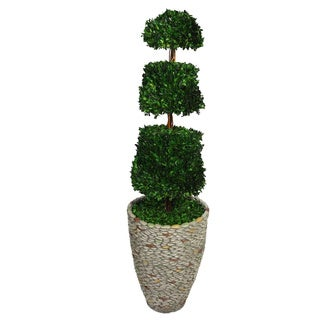 Laura Ashley 58-inch Tall Preserved Natural Spiral Boxwood Cone Topiary in Fiberstone Planter