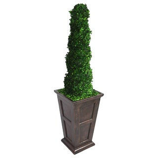 Laura Ashley 69-inch Tall Preserved Natural Spiral Boxwood Topiary in Fiberstone Planter