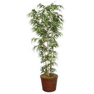 Laura Ashley 77'' Tall Natural Bamboo Tree in 17'' Fiberstone Planter