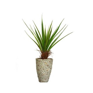 Laura Ashley 58-inch Tall Agave Plant with Cocoa Skin in Fiberstone Planter