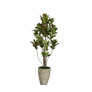 Laura Ashley 86-inch Croton Tree with Multiple Trunks in 16-inch Fiberstone Planter