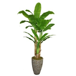 "Laura Ashley 86"" Tall Banana Tree with Real Touch Leaves in 16"" Fiberstone Planter"