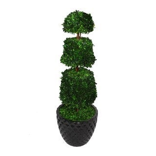 "Laura Ashley 49.5"" Tall Preserved Natural Spiral Boxwood Cone Topiary in 16"" Fiberstone Planter"