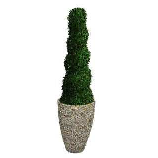"Laura Ashley 64"" Tall Preserved Natural Spiral Boxwood Topiary in 16"" Fiberstone Planter"