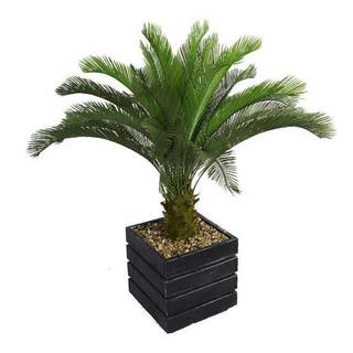 "Laura Ashley 54"" Tall Cycas Palm Tree in 14"" Fiberstone Planter"