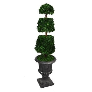 "Laura Ashley 58"" Tall Preserved Natural Spiral Boxwood Cone Topiary in 16"" Fiberstone Planter"