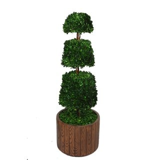 "Laura Ashley 49"" Tall Preserved Natural Spiral Boxwood Cone Topiary in 16"" Fiberstone Planter"