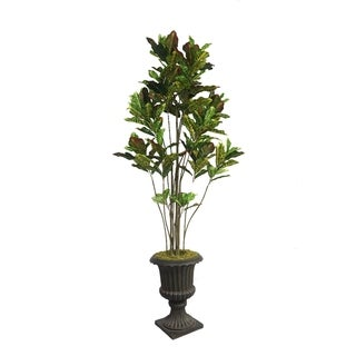 "Laura Ashley 86"" Tall Croton Tree with Multiple Trunks in 16"" Fiberstone Planter"