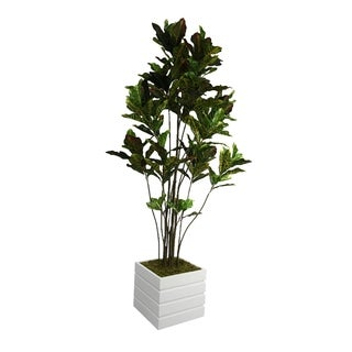"Laura Ashley 78"" Tall Croton Tree with Multiple Trunks in 14"" Fiberstone Planter"