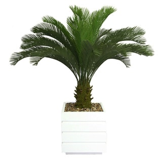 Laura Ashley 54-inch Tall Cycas Palm Tree with 14-inch Fiberstone Planter