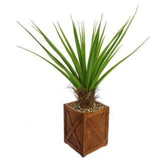 "Laura Ashley 53"" Tall Agave Plant with Cocoa Skin in 13"" Fiberstone Planter"