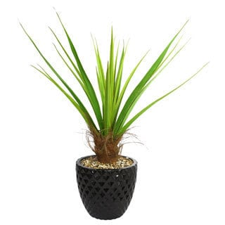 Laura Ashley 50-inch Tall Agave Plant and 16-inch Fiberstone Planter