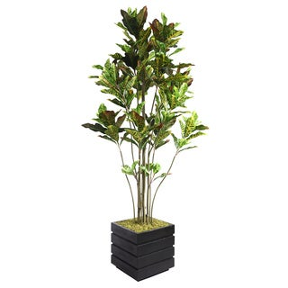 Laura Ashley 78-inch Tall Croton Tree in 14-inch Fiberstone Planter