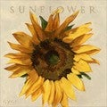 'Amberton Publishing Sunflower' Canvas Art