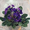 'Amberton Publishing Violets' Canvas Art