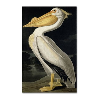 John James Audubon 'American White Pelican' Canvas Art