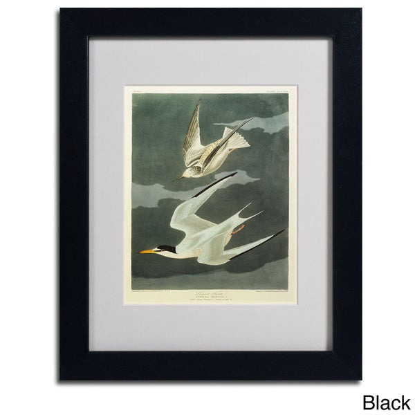 John James Audubon 'Lesser Tern and Little Tern' Framed Matted Art