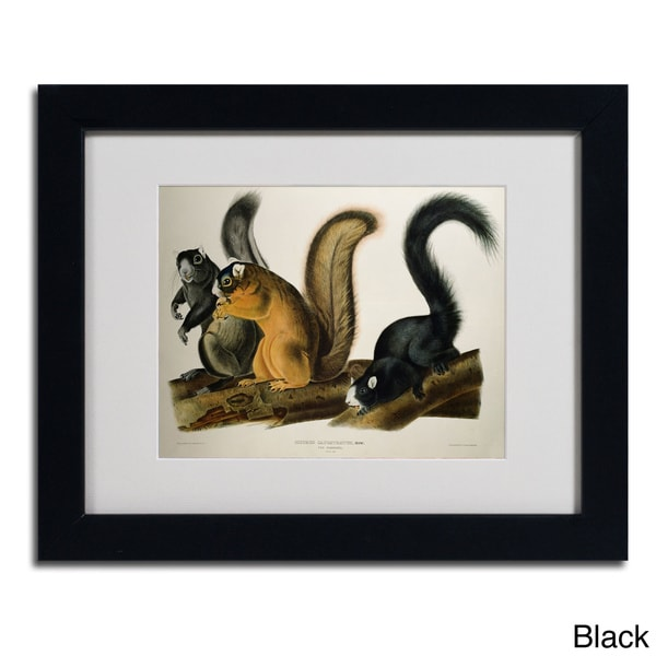 John James Audubon 'Fox Squirrel' Framed Matted Art