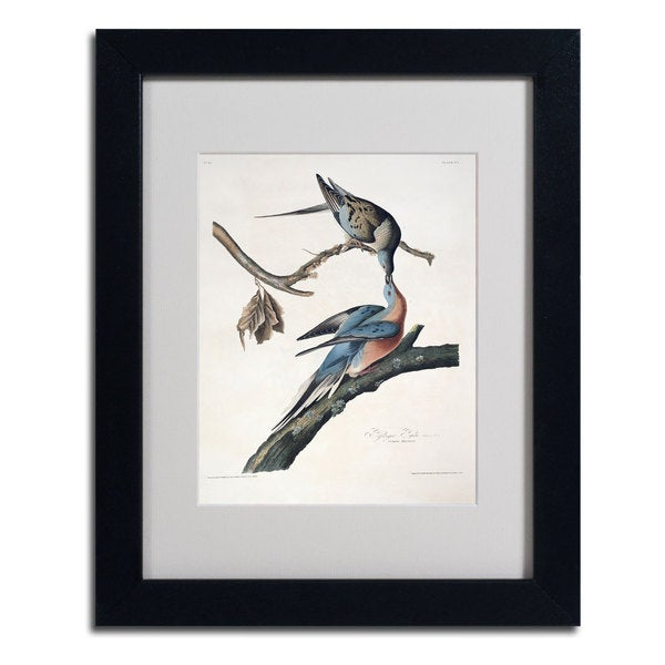 John James Audubon 'Passenger Pigeon' Framed Matted Art