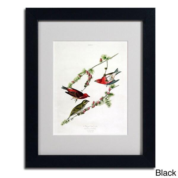 John James Audubon 'Purple Finch' Framed Matted Art