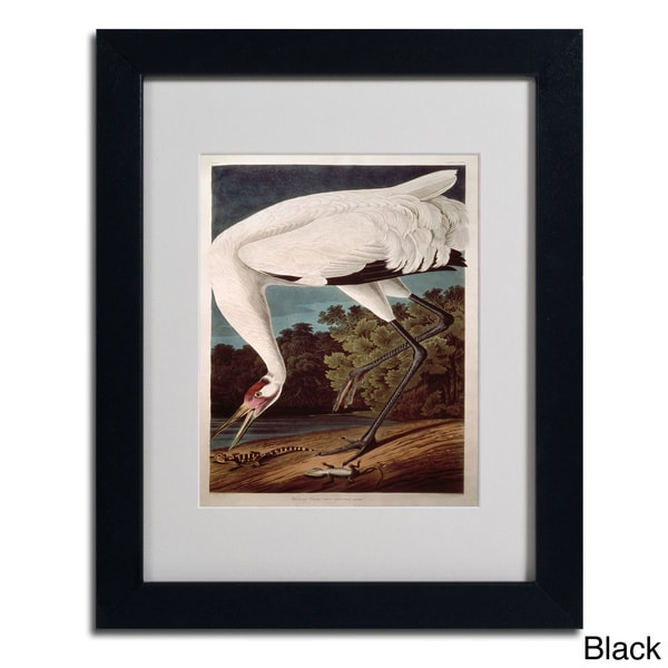 John James Audubon 'Whooping Crane' Framed Matted Art