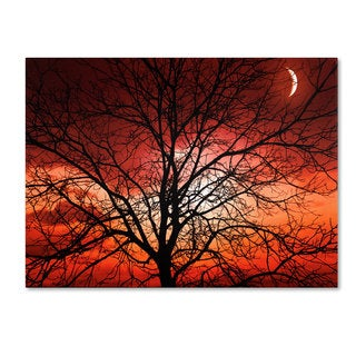 Philippe Sainte-Laudy 'Big Bad Moon' Canvas art