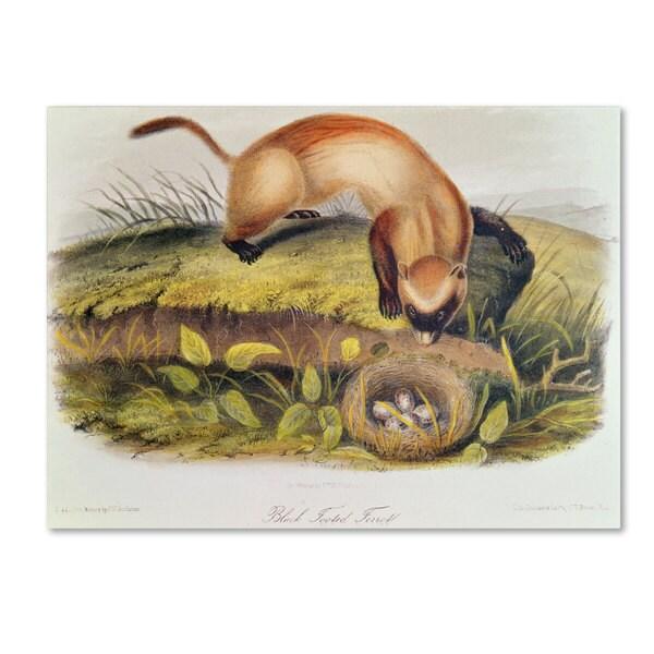 John James Audubon 'Black-Footed Ferret' Canvas Art