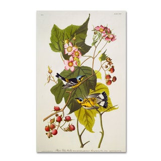 John James Audubon 'Black and Yellow Warbler' Canvas Art