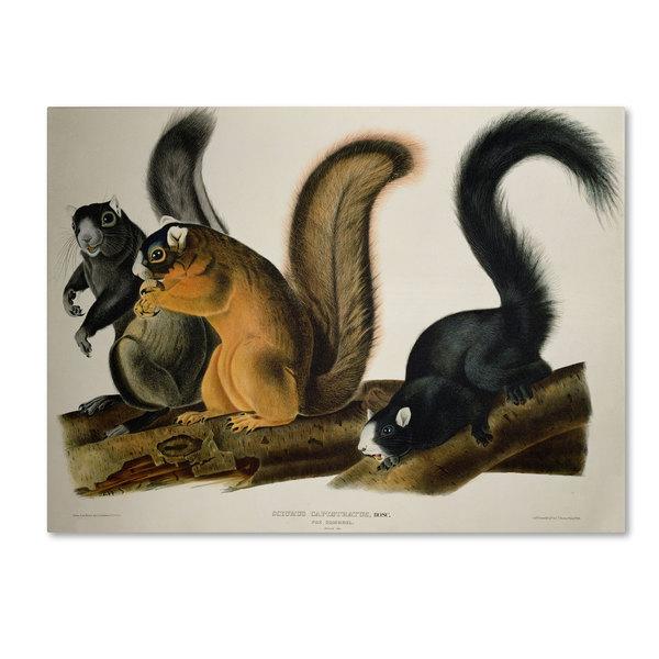 John James Audubon 'Fox Squirrel' Canvas Art