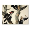 John James Audubon 'Ivory-Billed Woodpecker' Canvas Art