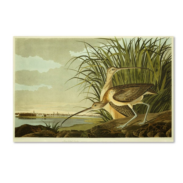 John James Audubon 'Long Billed Curlew' Canvas Art