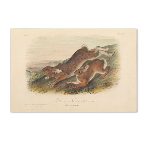 John James Audubon 'Northern Hare' Canvas Art