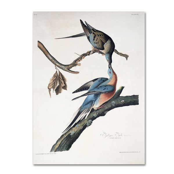 John James Audubon 'Passenger Pigeon' Canvas Art