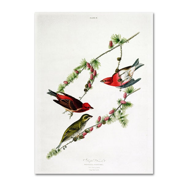 John James Audubon 'Purple Finch' Canvas Art