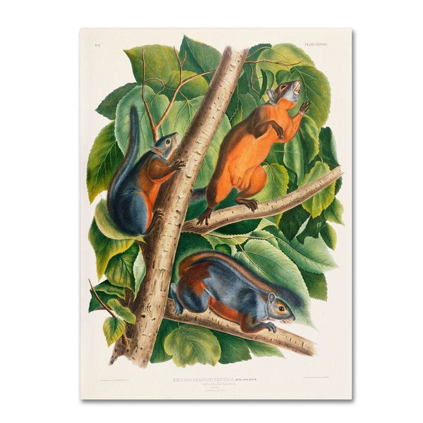 John James Audubon 'Red-Bellied Squirrel' Canvas Art