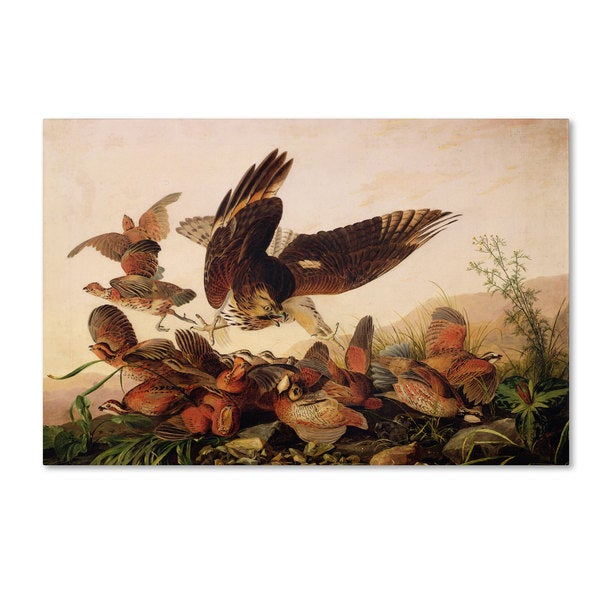 John James Audubon 'Red-Shouldered Hawk' Canvas Art