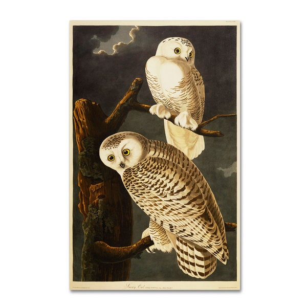 John James Audubon 'Snowy Owl' Canvas Art