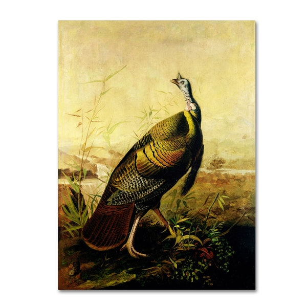 John James Audubon 'American Wild Turkey Cock' Canvas Art
