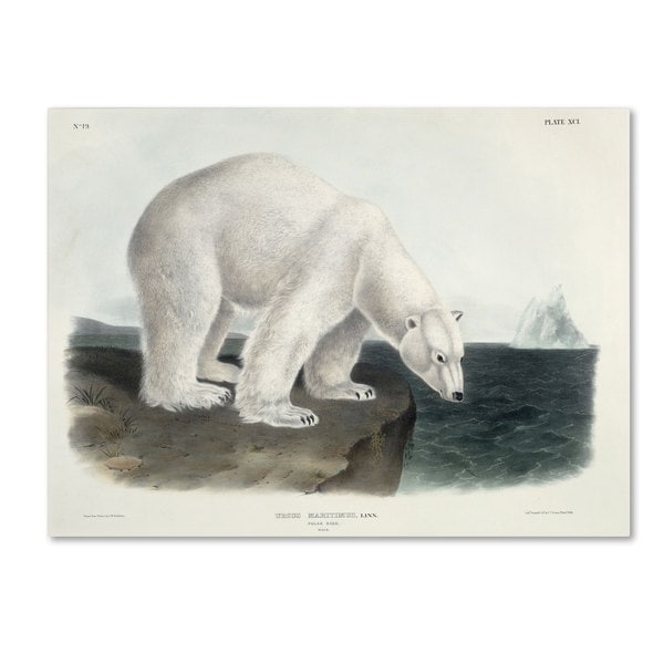 John James Audubon 'Ursus Maritimus Polar Bear' Canvas Art