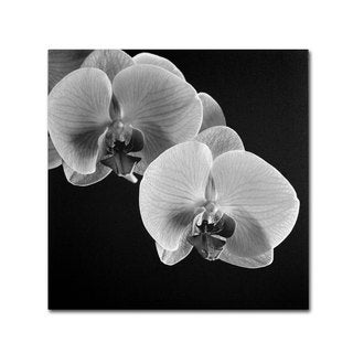 Michael Harrison 'Orchids' Canvas Art