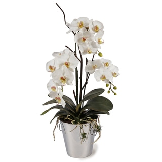 White Orchids in Silver Metal Vase
