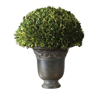 Globe Preserved Boxwood Decorative Plant
