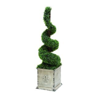 Spiral Shaped Topiary Boxwood Plant