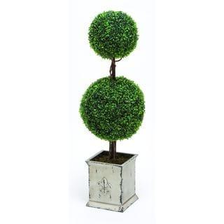 Round Topiary Boxwood Plant