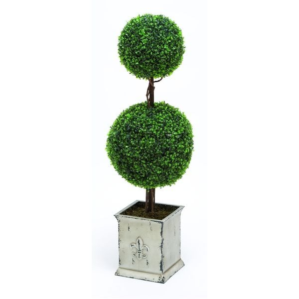 Round Topiary Boxwood Plant