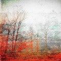 Parvez Taj 'Deep Forest' Canvas Print