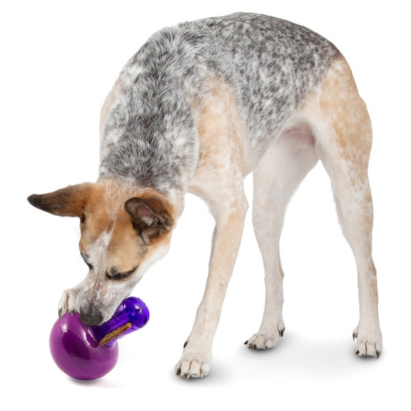 PetSafe Busy Buddy Teeter Teater Pet Dog Toy